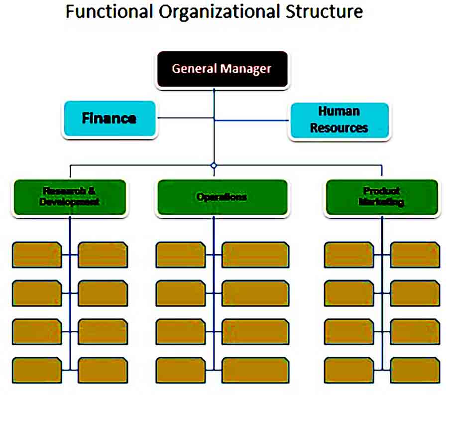functional organizational structure chart