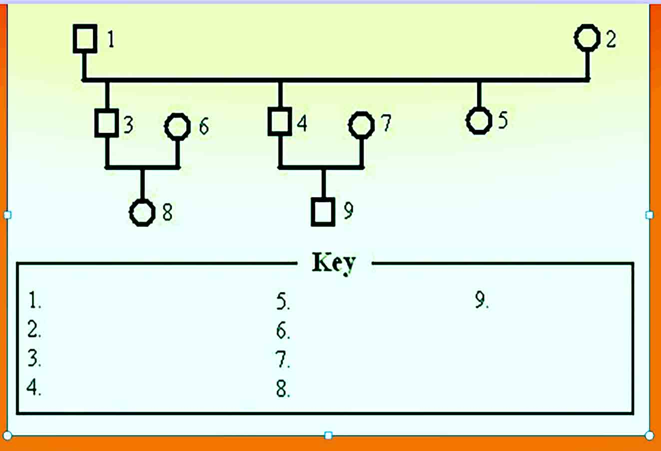 Genogram Template 26